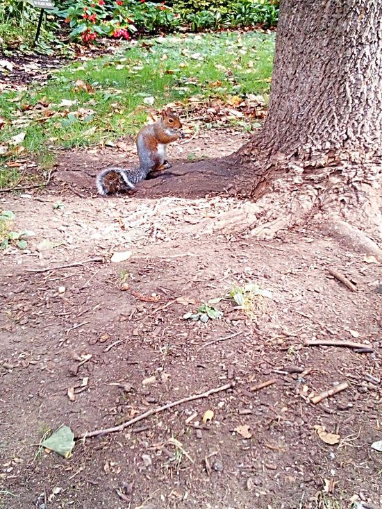 Animal Themes Field Tranquility Garden No People Tranquil Scene Outdoors Nature Nature High Angle View Squirrel Wild Animal