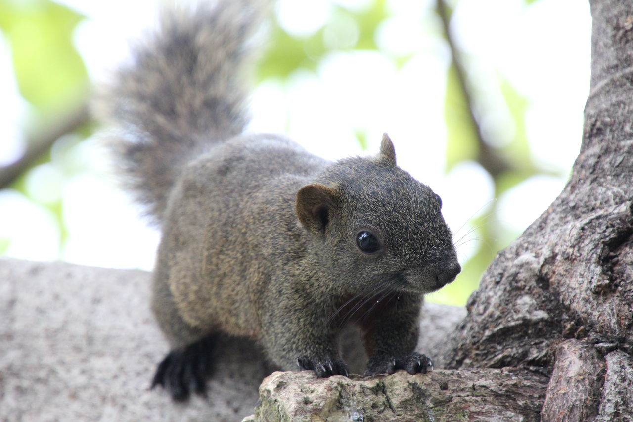 one animal, animal themes, animals in the wild, focus on foreground, mammal, day, close-up, squirrel, outdoors, no people, animal wildlife, nature