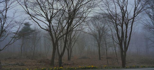 Misty Landscape Misty Forest Landscape Misty