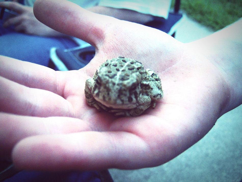 Frog Kids Being Kids EyeEm Nature Lover TheMinimals (less Edit Juxt Photography) Living Bold Check This Out That's Me Taking Photos On The Road Hang Loose Nebraska