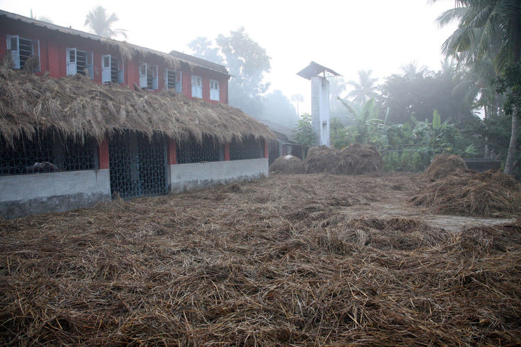 Misty morning in the Bengal countryside Kumrokhali Agriculture Environment Fog Forest India Jungle Kumrokhali Misty Nature Palm Tree Plant Rainforest Rural Scene Sunrise Tranquil Tree Tropical Warm West Bengal Wet Wild Wilderness