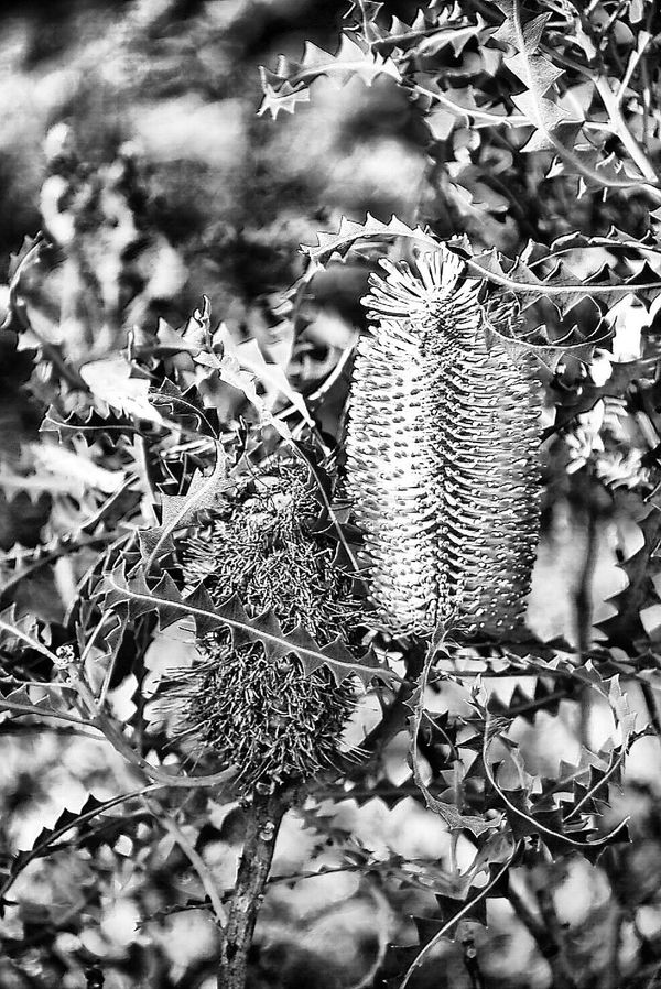 Nature Beauty In Nature Blackandwhite Kings Park And Botanical Garden Perth Australia