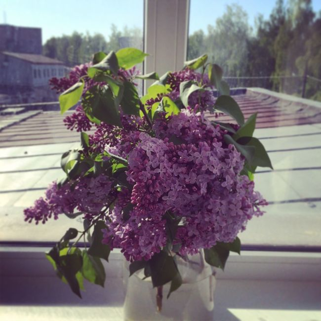 Lilas It's Almost Summer