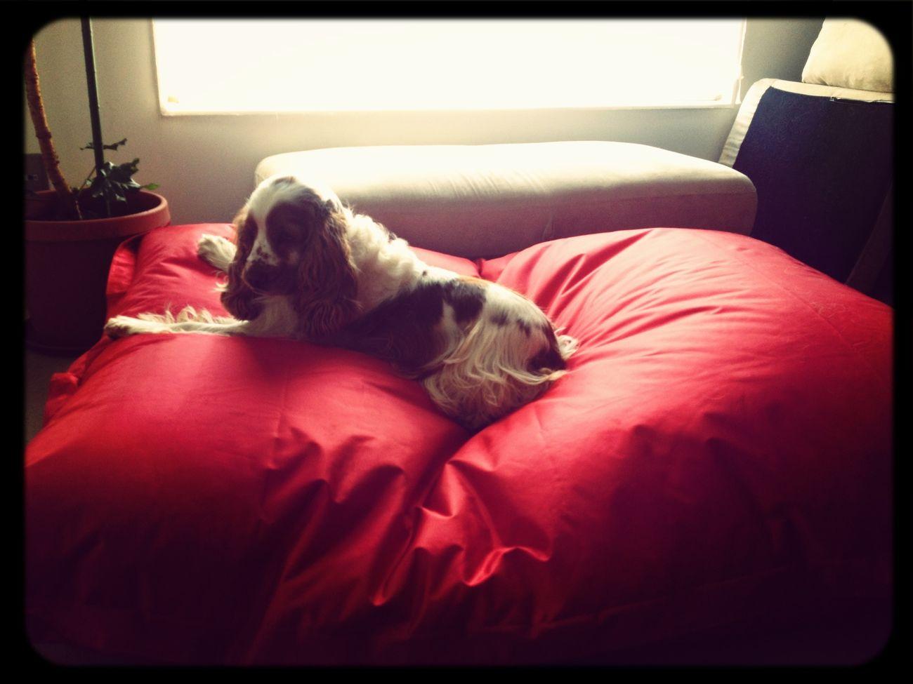 A Leòn le queda chica la cama y Jack duerme King Style!