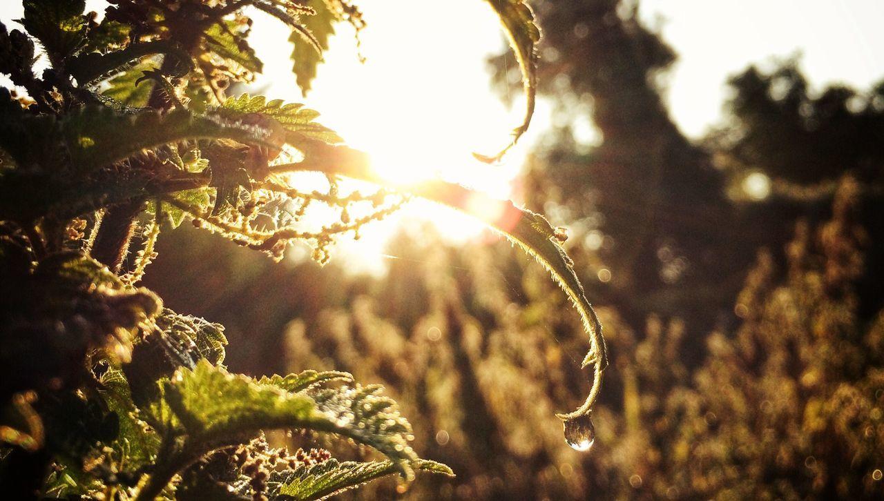 Sun ☀ Rain Drops Nature