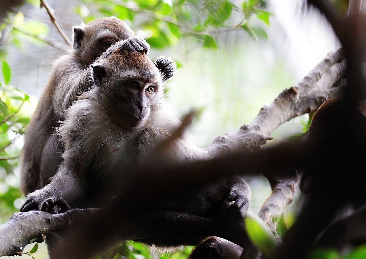 Close-Up Of Monkey Sitting On Tree Stump