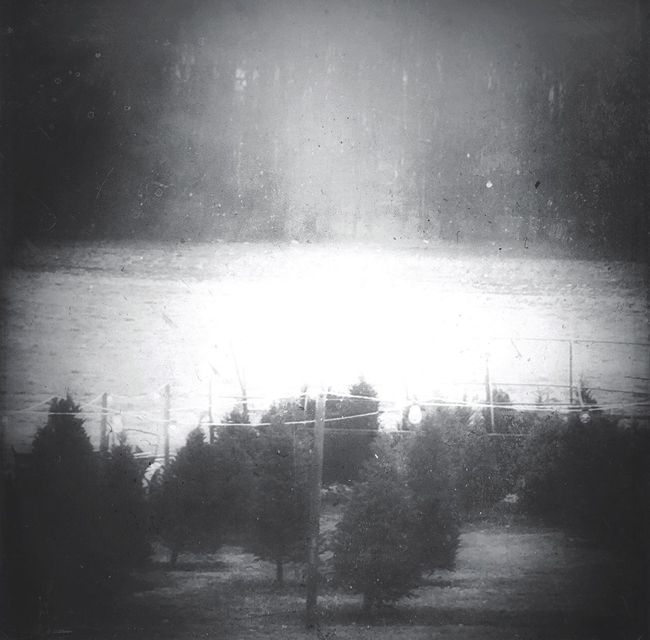 My Winter Favorites Christmas Tree Farm Tree Farm Shades Of Grey Black & White Monochrome Landscape_Collection Light And Shadow