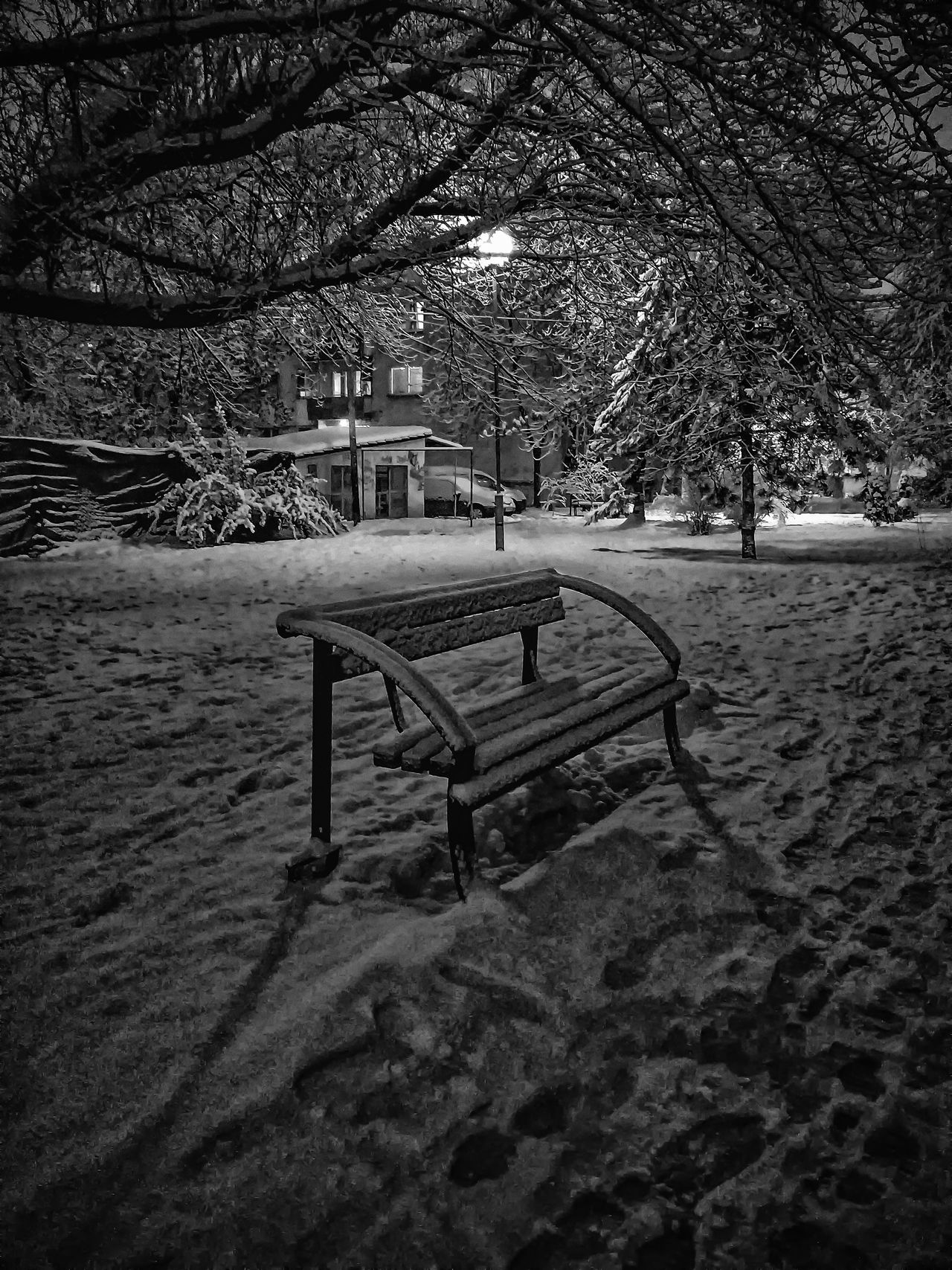 Wish you were here Bench Branch Cold Temperature Ice January Light Macedonia Nature Night No People Quiet Skopje Snow Trees Urban Winter