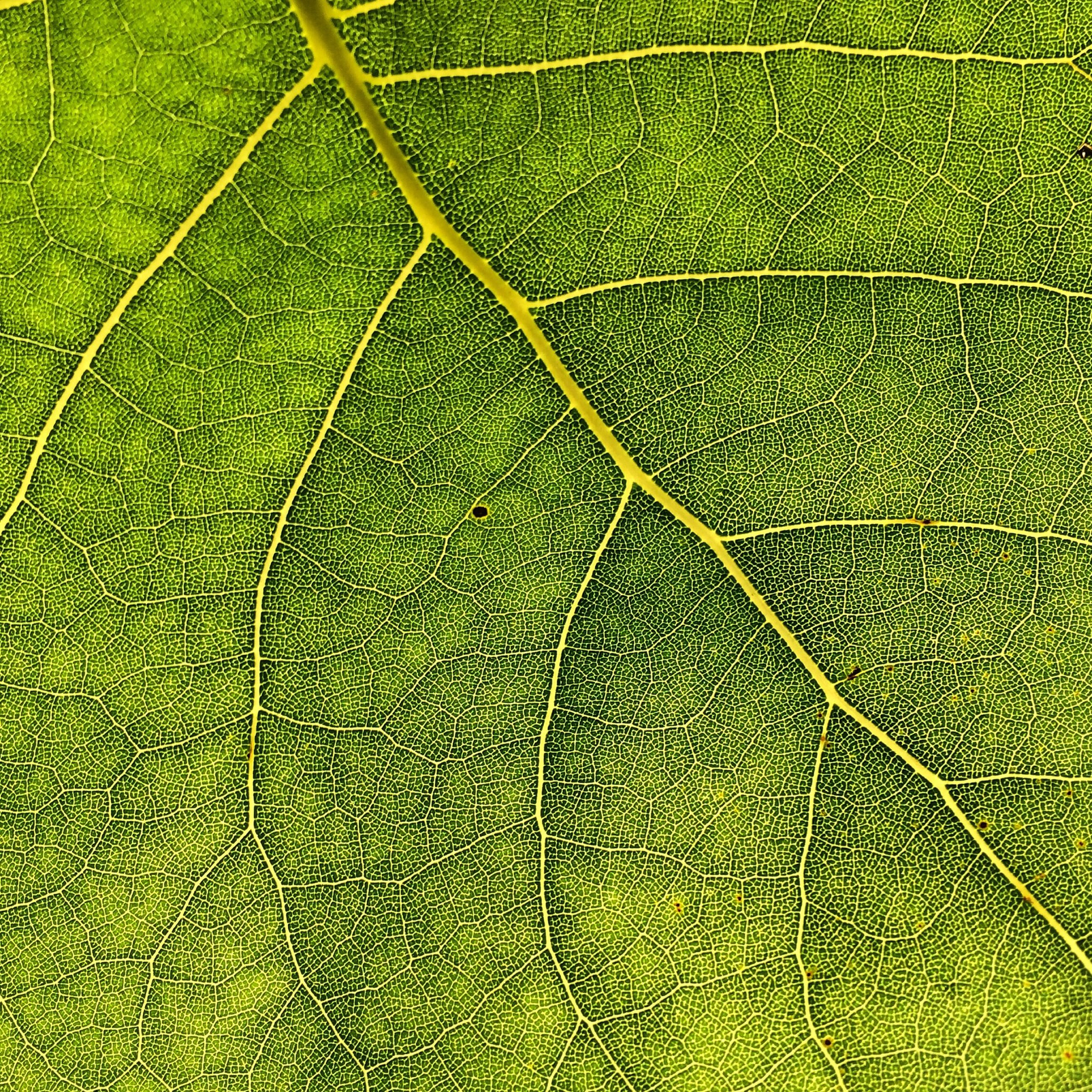 full frame, green color, backgrounds, pattern, textured, close-up, grass, leaf, growth, nature, natural pattern, green, high angle view, no people, day, outdoors, detail, leaf vein, sunlight, field