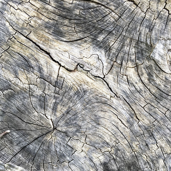Cracks and patterns in the trunk of a felled tree Abstract Age Aged Close Up Cracked Cracks Decay Decaying Detail Felled Tree Lines Lines And Shapes Nature Pattern Splits Splitting Surface Texture Tree Tree Trunk Weathered Wood