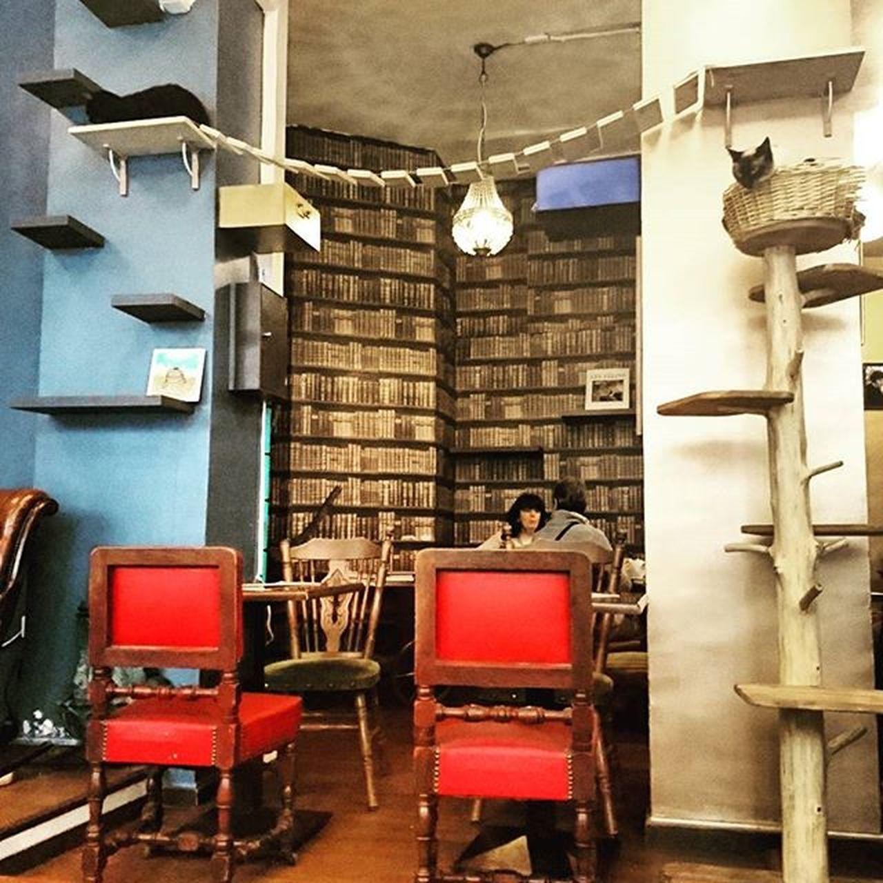Welcome to the Cats' Café ! Cafe Chats Beaucoupdechats Tropdechats Paris Bastille VSCO Vscocam Vscocamphotos Ig_paris