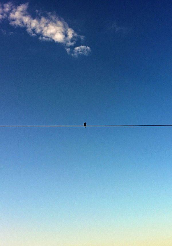 Ein Vogel auf den Drahtseil. Sky Porn Clouds Blue