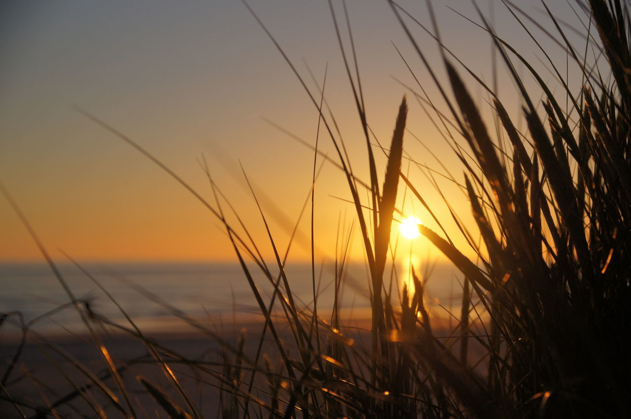 Børsmose Strand Camping Beach Beauty In Nature Børsmose Strand Dänemark Close-up Gold Colored Landscape Meer Nature No People Outdoors Danmark Sea Sky Sonne Sonnenstrahlen Sonnenuntergang Strand Sun Sunbeam Sunset Tranquil Scene Vacations Water