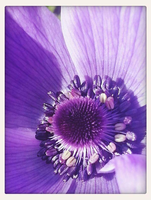 closer Purple Flower Purple Flowers