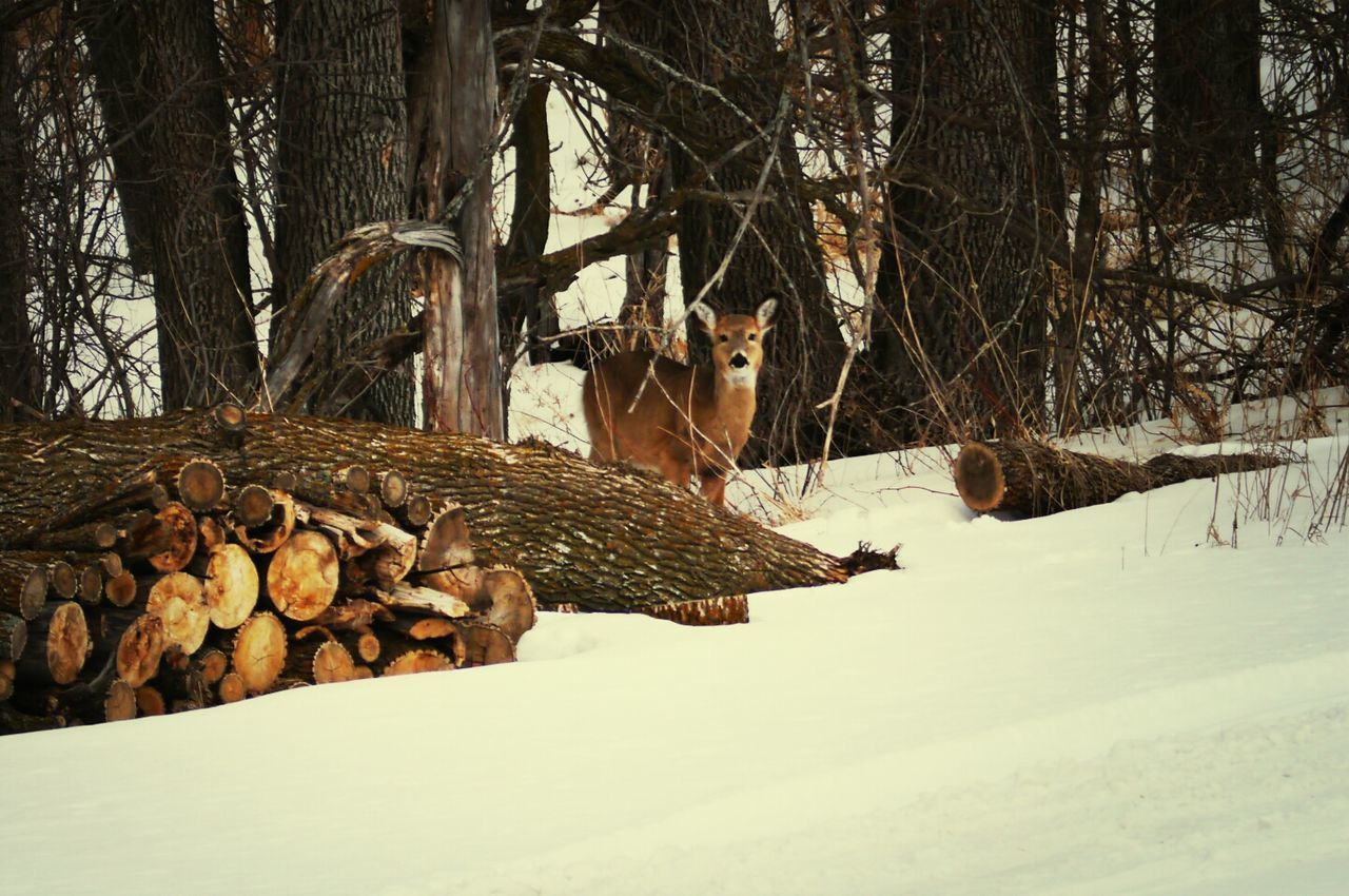 Deer On Snow Covered Landscape In Forest
