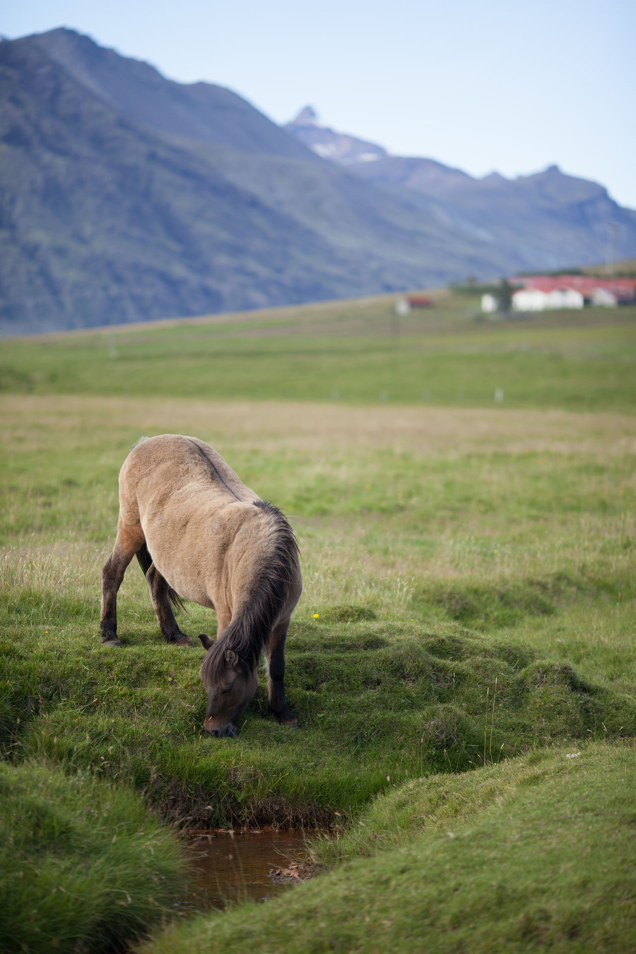 Beautiful stock photos of pony, Animal Themes, Day, Domestic Animals, Farm