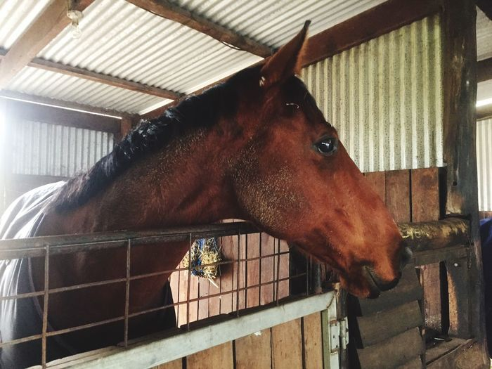 Horse Stable Beautiful ♥ Animal Head  Horse Photography  Western Australia