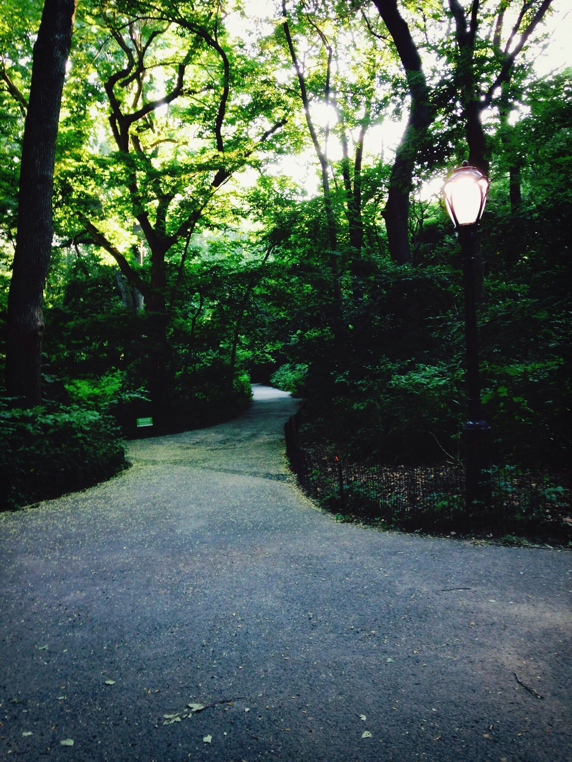 tree, the way forward, street light, growth, footpath, tranquility, branch, lighting equipment, nature, empty, park - man made space, tree trunk, sunlight, shadow, tranquil scene, walkway, street, diminishing perspective, green color, outdoors