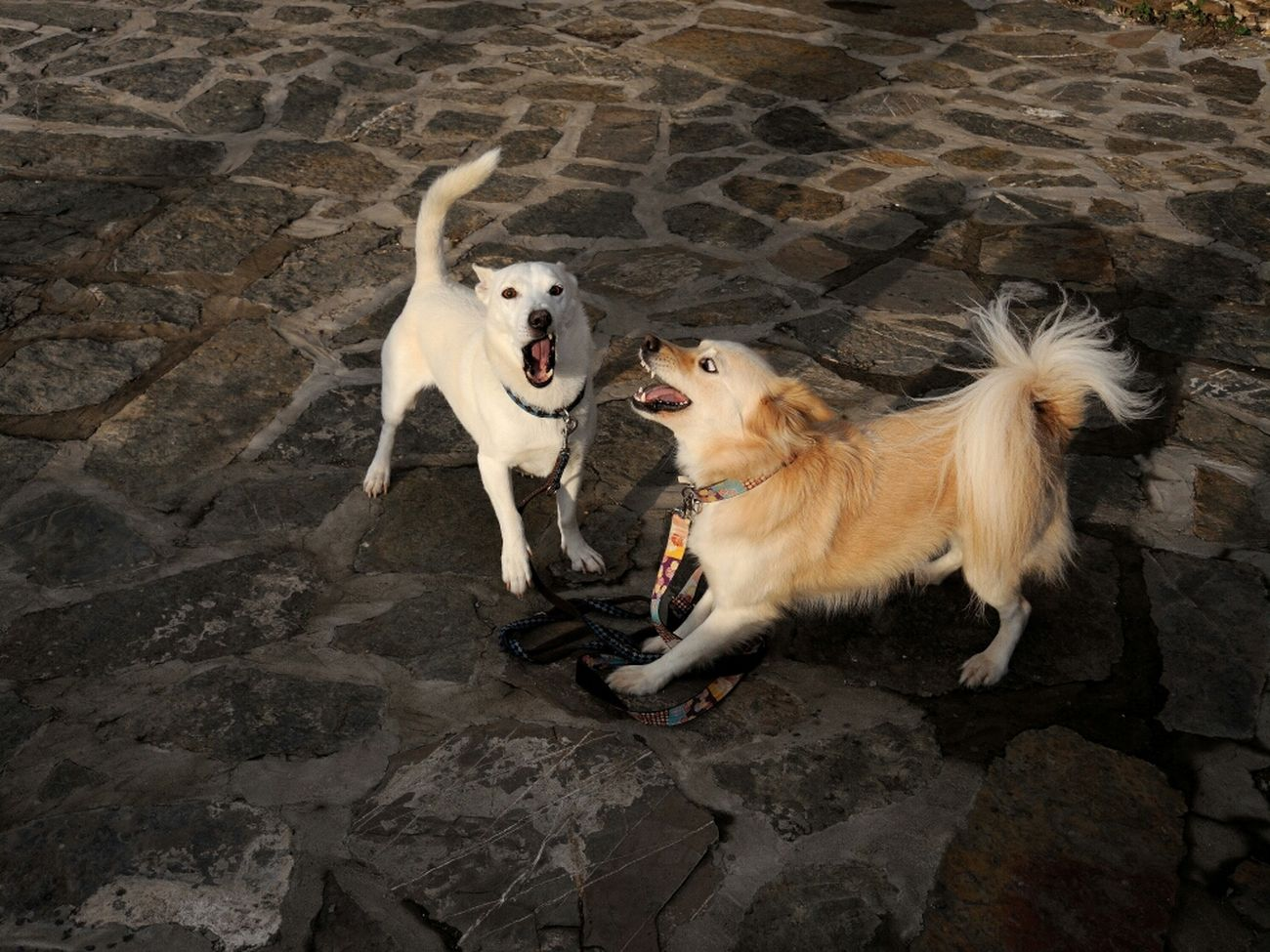 Dogs Looking For Trouble