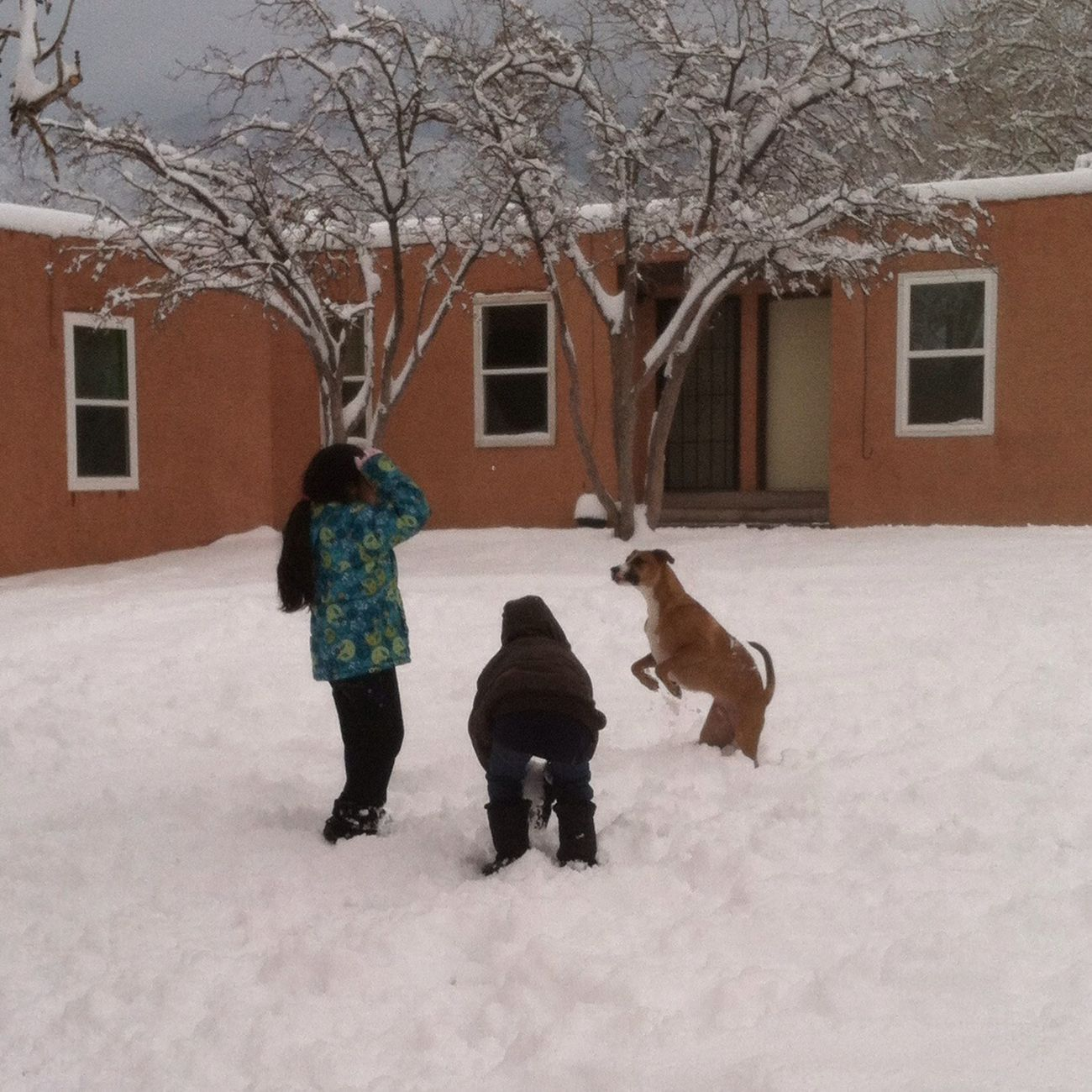 Snowfun! For The Love Of Dogs Enjoying Life Childhood Memories