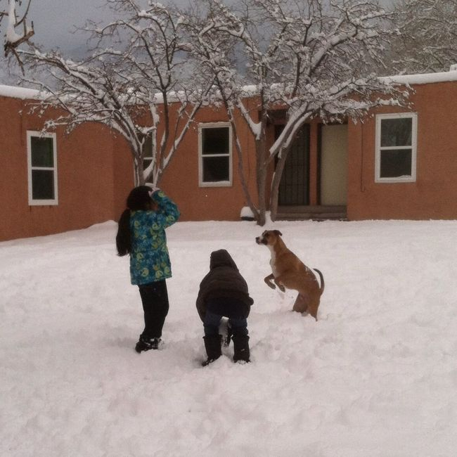 Snowfun! For The Love Of Dogs Enjoying Life Childhood Memories