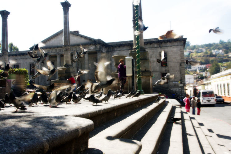 New Years 2017 Trip. I know its not a great pic, but I need to share it with you guys Architecture Colonial Colonial Architecture Colonial Style Day Doves Fine Art Photography Old Town Old Town Square Outdoors Quetzaltenango Still Life Still Life Photography Stone Stairs Stone Steps Street Photography Streets Town Square Travel Travel Destinations Urban Urban Exploration Urban Photography Xela Xelajú