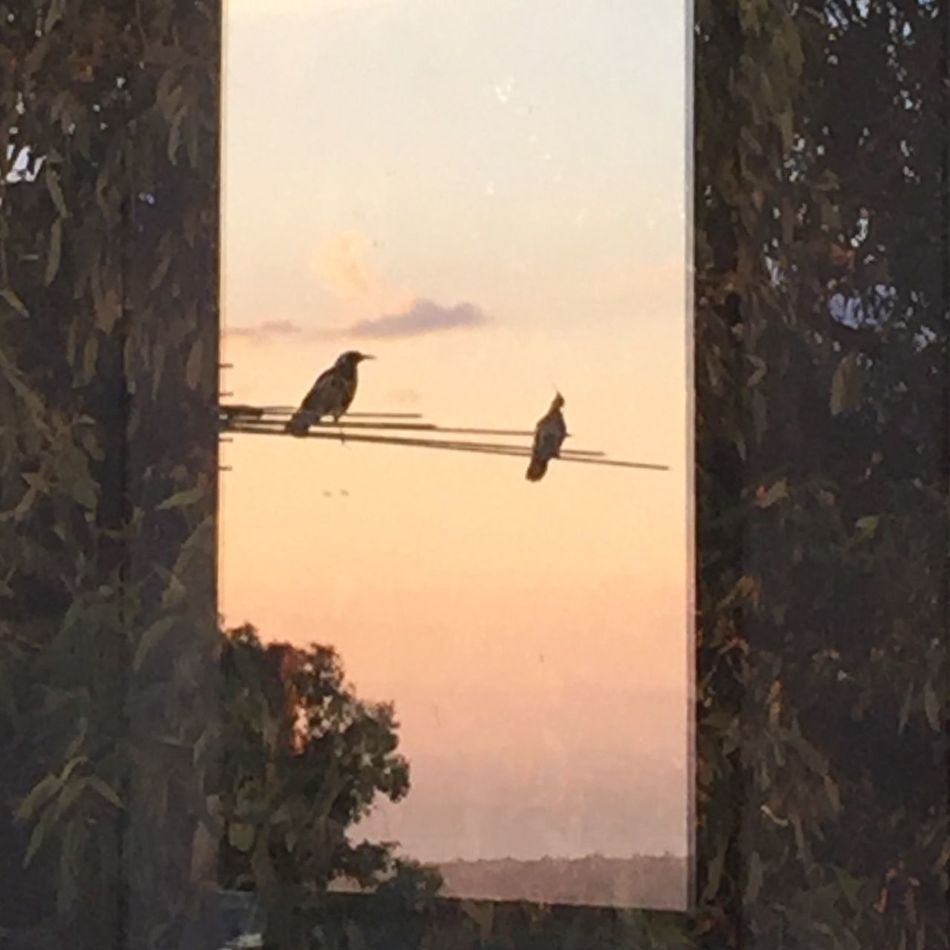 Reflection In The Window Bird Animal Themes Flying Animals In The Wild One Animal No People Animal Wildlife Nature Day Sky Sunset Tree Outdoors Architecture