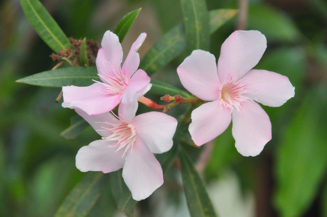 Pink flower in nature Flower Growth Nature Beauty In Nature Petal Freshness Fragility Close-up Plant Flower Head Pink Color Blooming Outdoors Floral