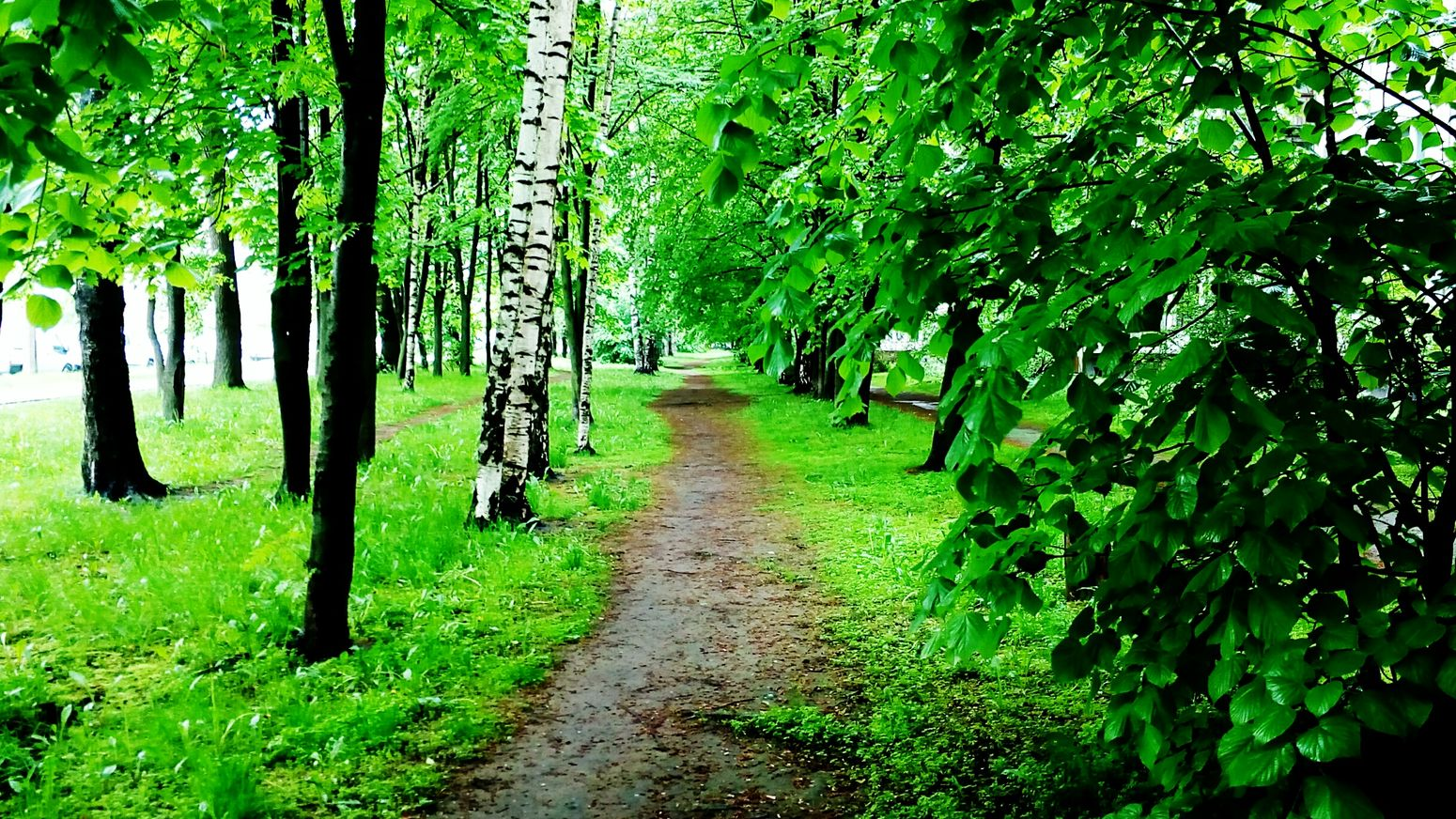 Sankt-Petersburg Springtime Green Color Rainy Days Just Walking Trees Magic City The Essence Of Summer