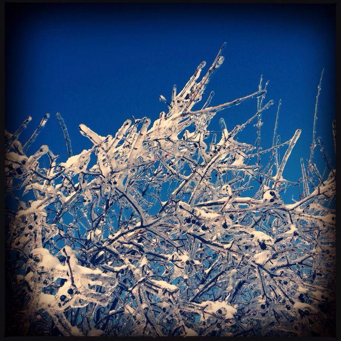 #trees #frozen #winter