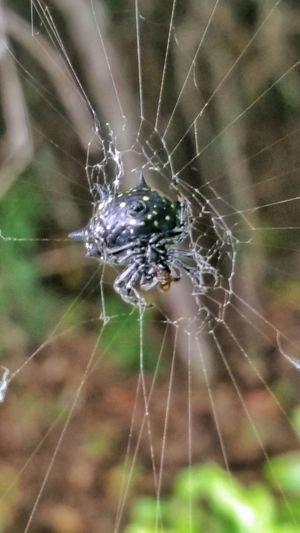 Spider Spider Food Spiderweb Feasting Eightleggedfreak Eight Legs