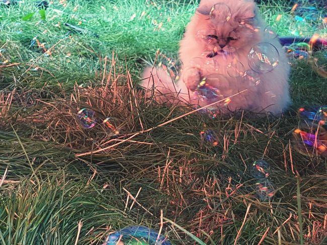 Cat My Cat Freddie Bubbles Grass