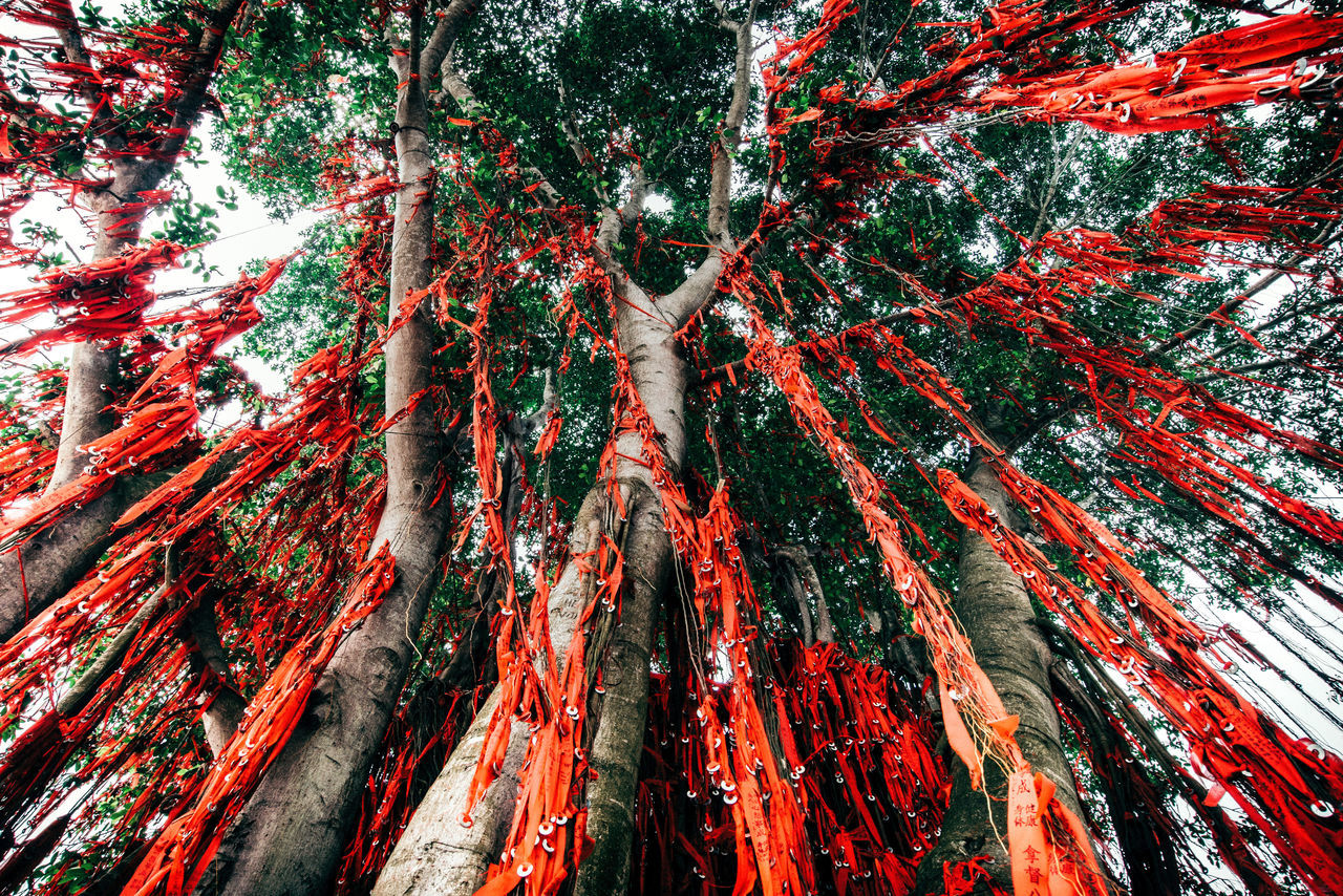 Ritual beauty in Nature belief ceremony chinese culture Growth Low angle view Nature no people outdoors Tree Tree trunk Be. Ready. Red