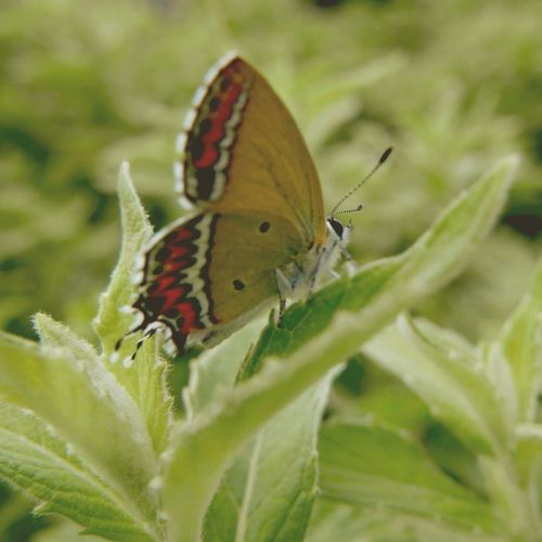 butterfly effect Butterfly Taking Photos EyeEm EyeEm Nature Lover OpenEdit Leica D-lux Typ109