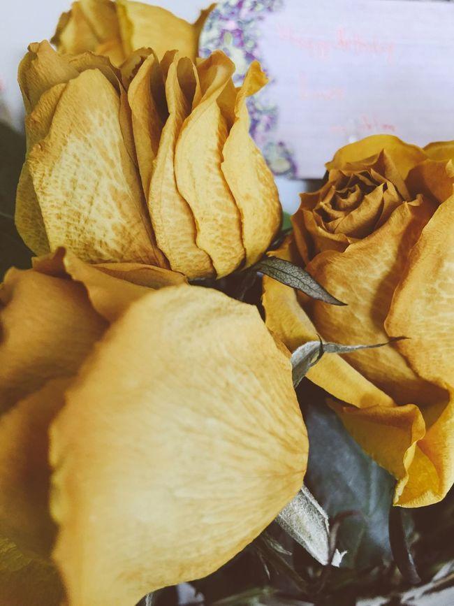 Yellows 2 Roses Flowers Best Of EyeEm Best EyeEm Shot NEM Mood Summer2016 AMPt_community