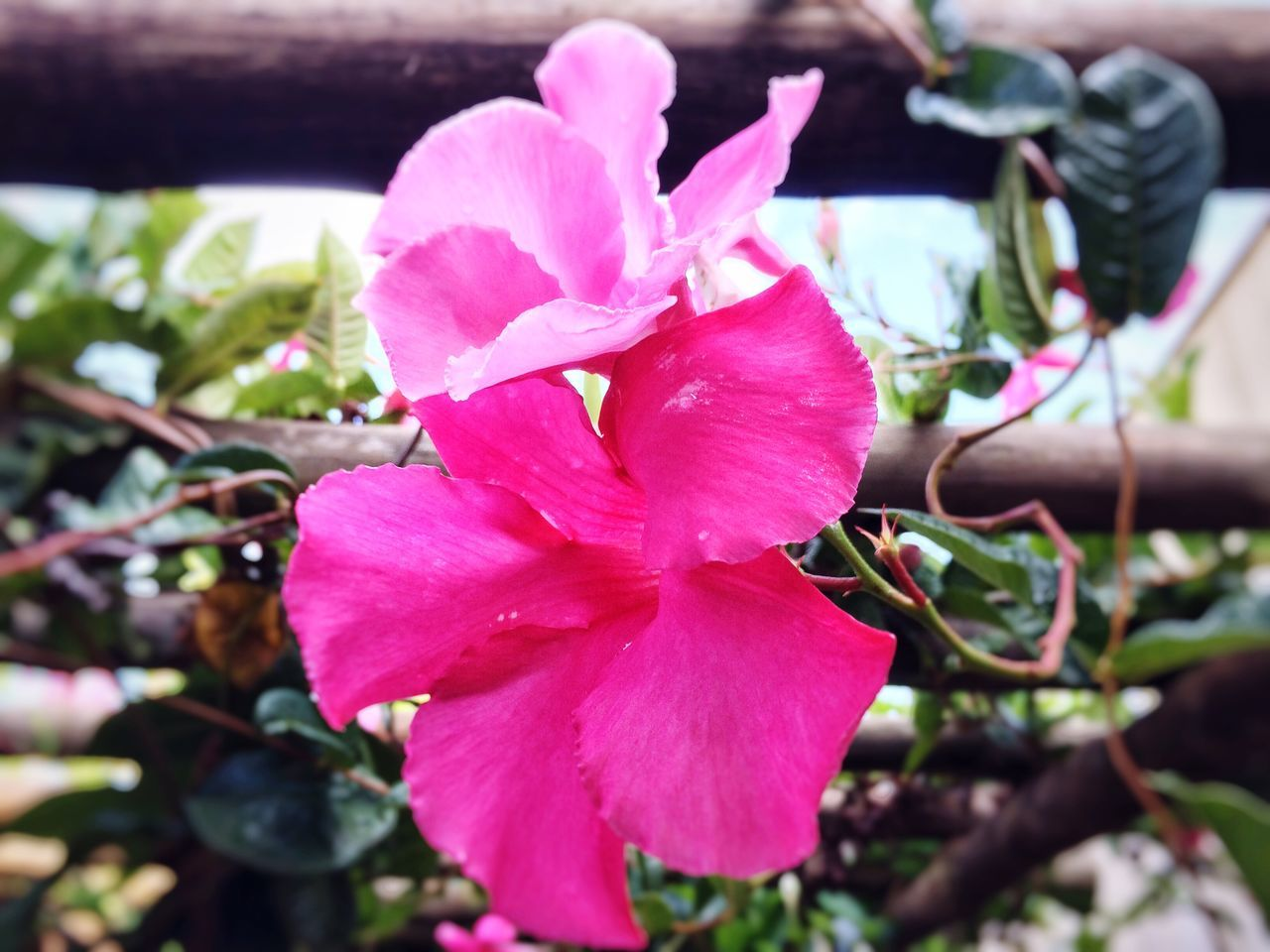 Flower Growth Pink Color Fragility Nature Beauty In Nature Petal Close-up Flower Head Plant Freshness No People Outdoors Blooming Day Rhododendron