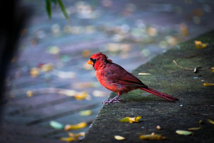 #Ameture #AngryBird #Nature  #birds #littlebird #nikon #nikon #photograpie #nikon 5600 #zoo