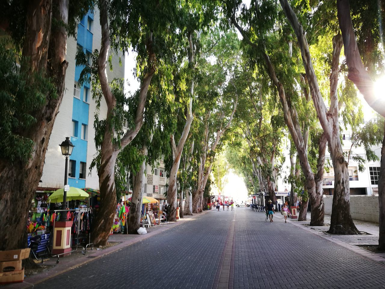 tree, street, the way forward, outdoors, day, road, city, nature, no people