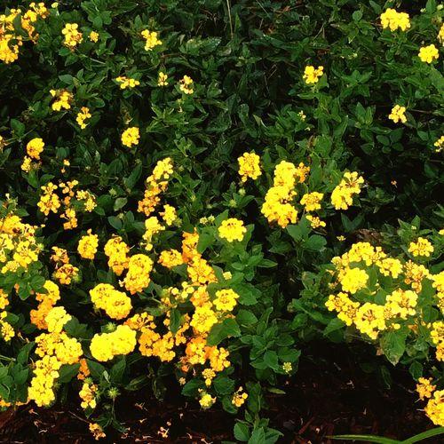 Yellow Flowers Nature Garden