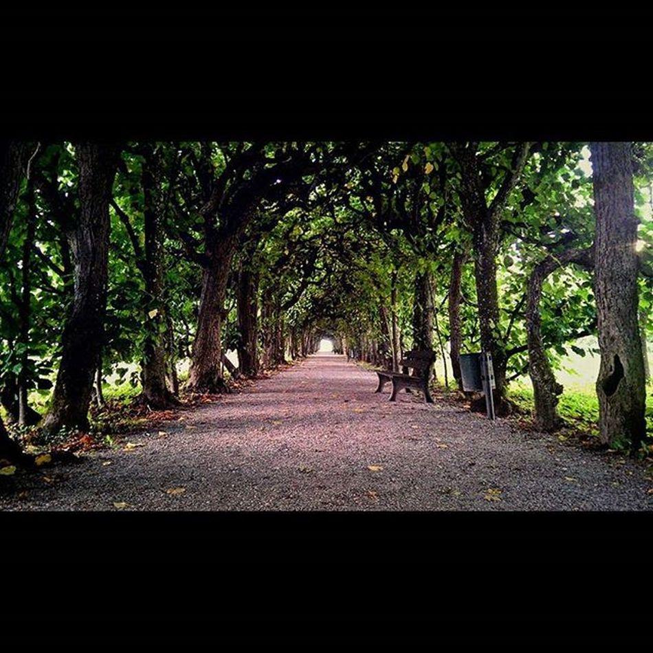Pathway Trees Green Schloss dachau Glitch