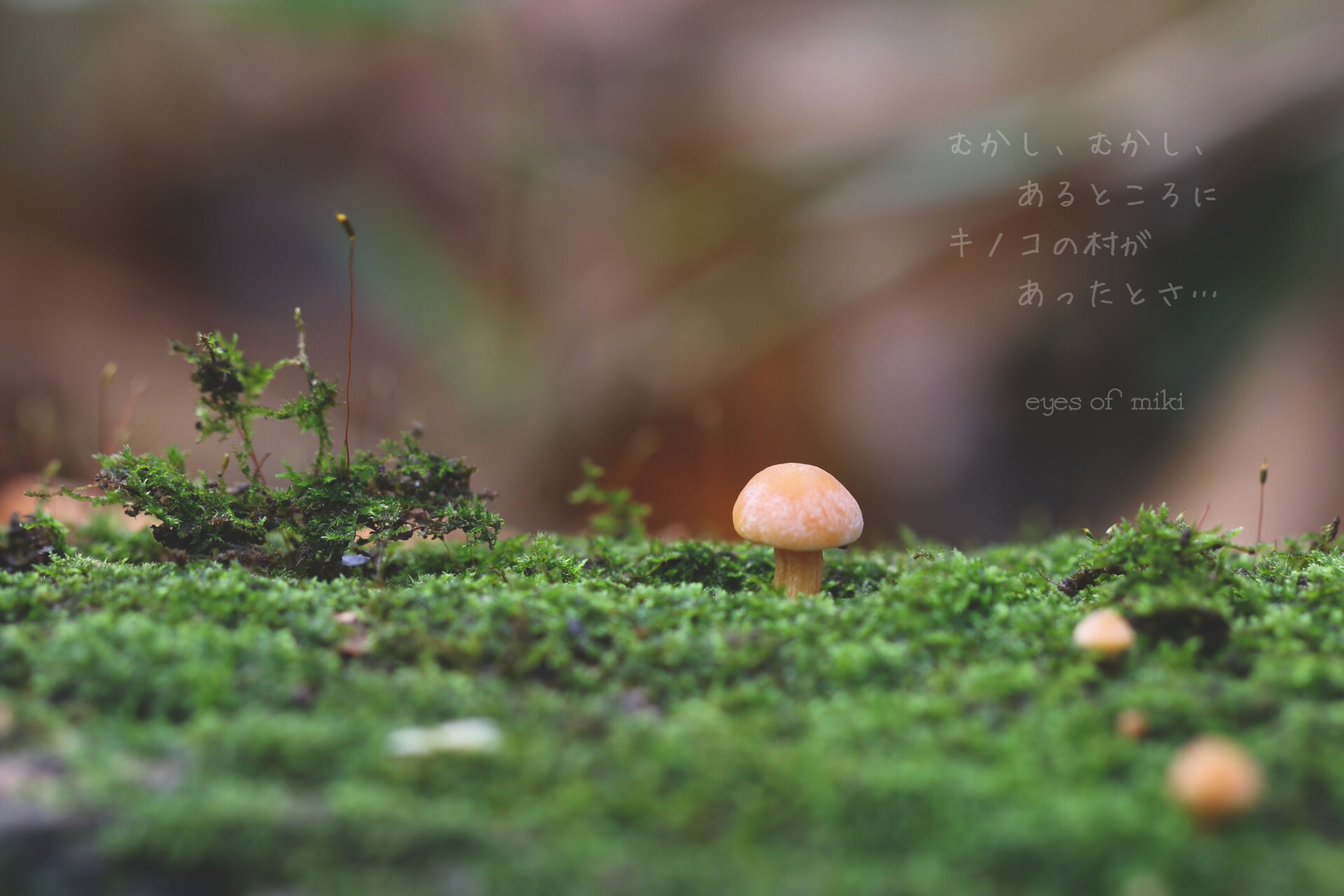 grass, growth, selective focus, mushroom, plant, field, green color, nature, close-up, focus on foreground, fungus, growing, toadstool, beauty in nature, grassy, outdoors, tranquility, no people, day, forest