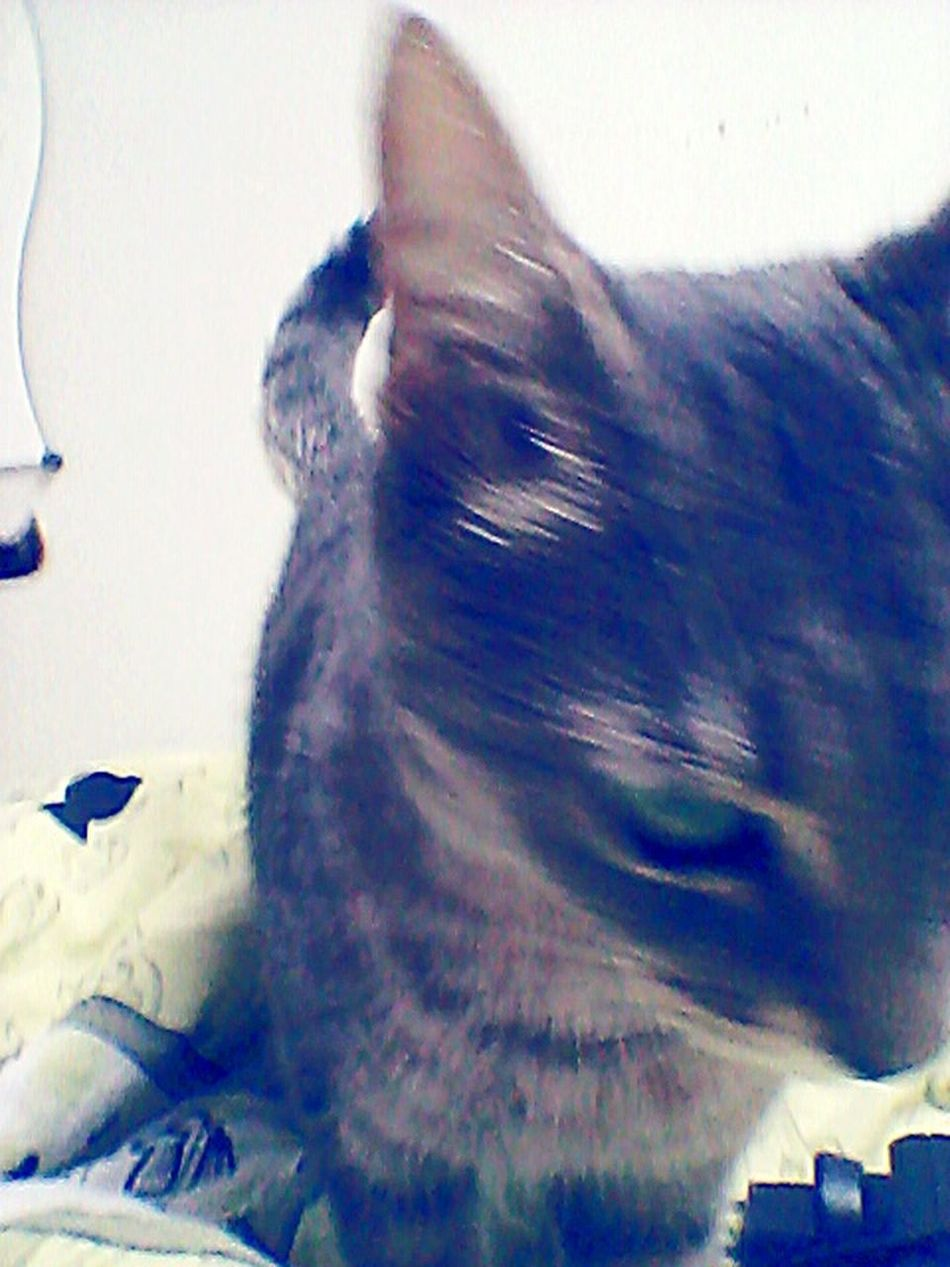 Just the cat being nice...for once.Impossible Too Much Movement Stop Please Cat Love Her Hello World First Eyeem Photo
