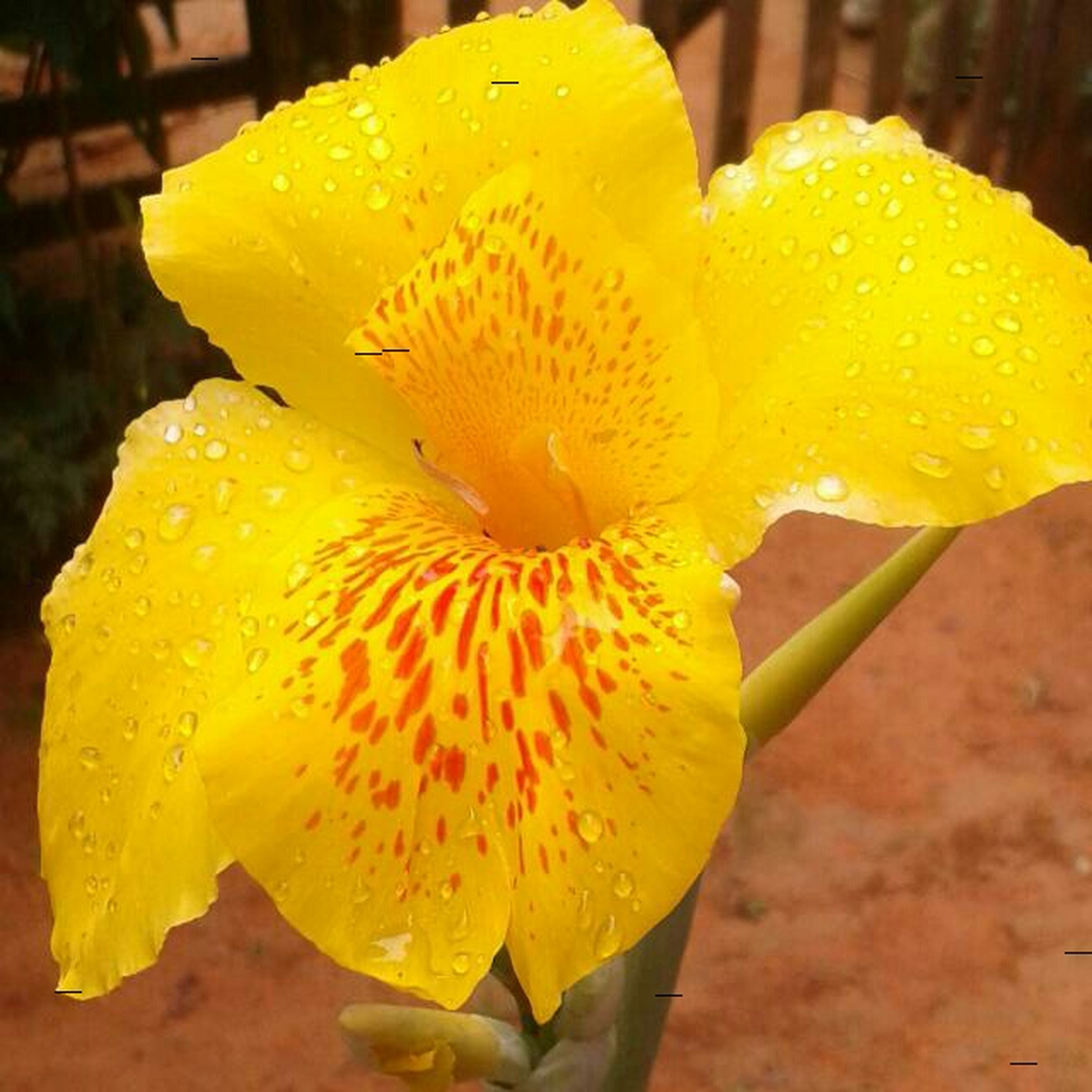 flower, petal, freshness, flower head, yellow, fragility, drop, close-up, wet, beauty in nature, water, growth, single flower, nature, blooming, dew, focus on foreground, in bloom, plant, season