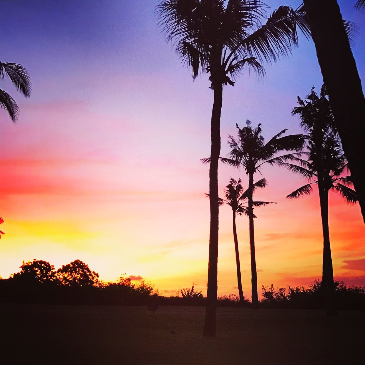 Sunset Sky Palm Tree Beauty In Nature Bali, Indonesia Ayana Resort the villas