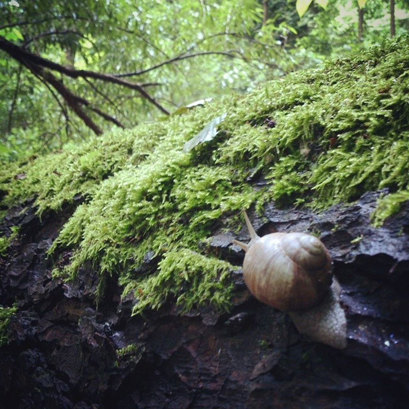 Несмотря на погоду, дорогу осилит идущий сырец Киев город Syrets forest forest_trip лес дневник_наблюдателя kiev insta_kiev kievblog thekievblog wowkiev kievgram природа nature болото swamp