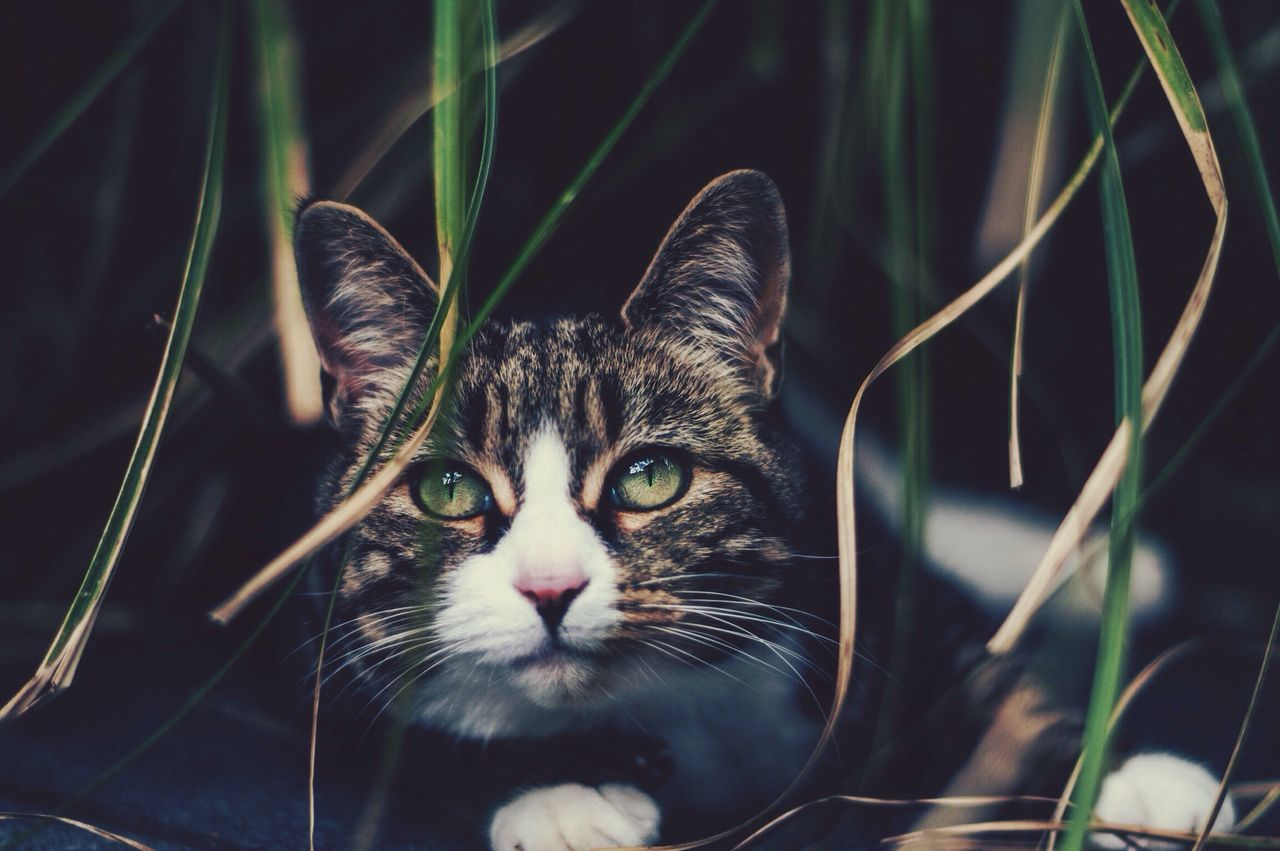 Beautiful stock photos of animals, Animal Themes, Close-Up, Day, Domestic Animals