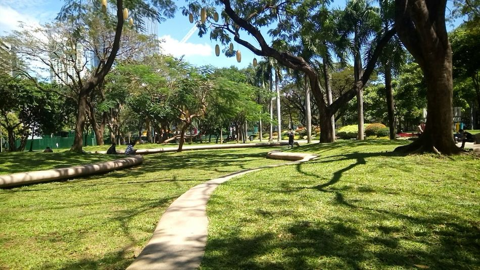Tree Green Color Growth Nature Shadow Grass Sunlight No People Beauty In Nature Outdoors Tranquil Scene Day Sky Freshness Plant Ayala Philippines Ayala Triangle Ayala Triangle Gardens Makati Makati City