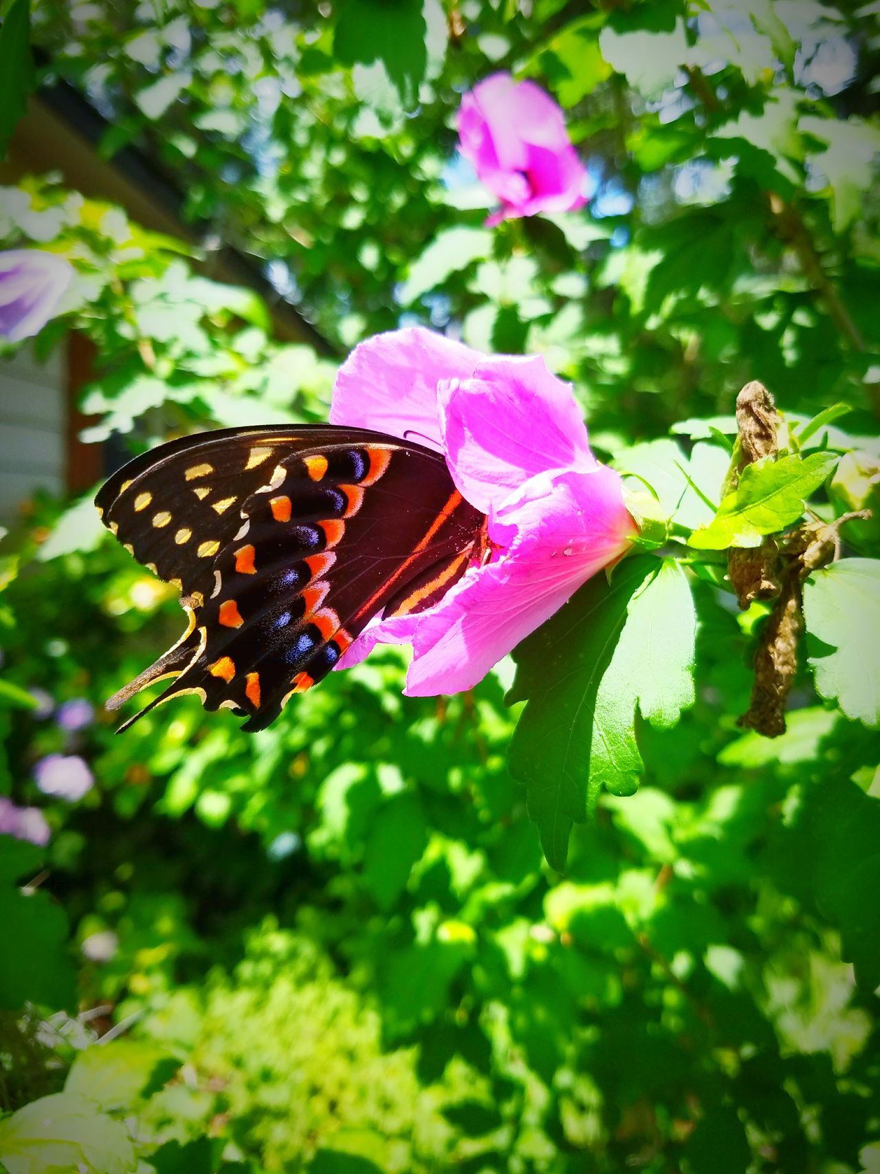 Butterfly,flowers,trees,nature,animals,