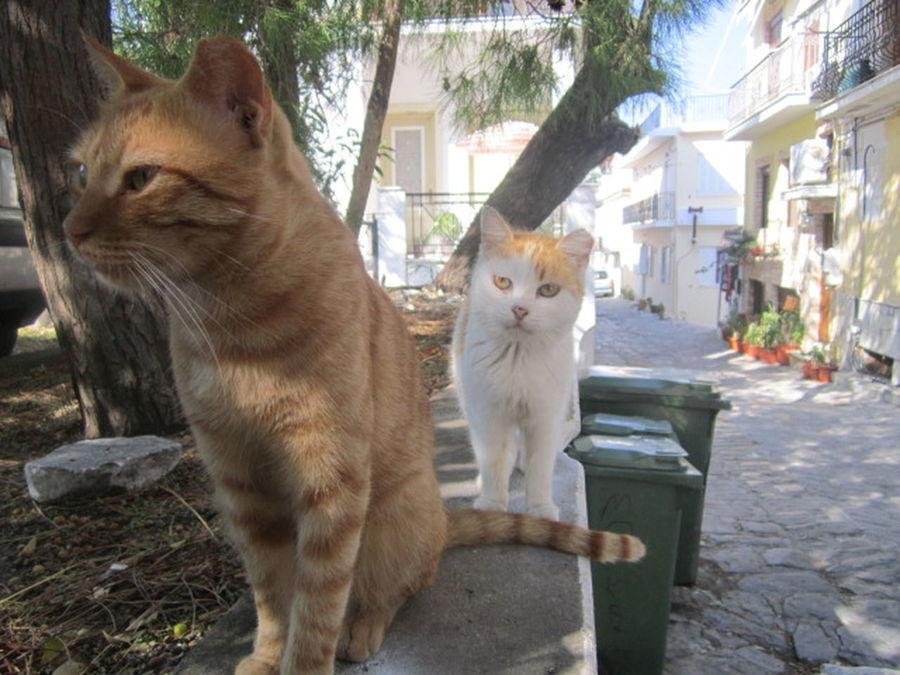 Animal Cat Close-up Curiosity Feline Greek Cats Nature Skiathos Street Cat