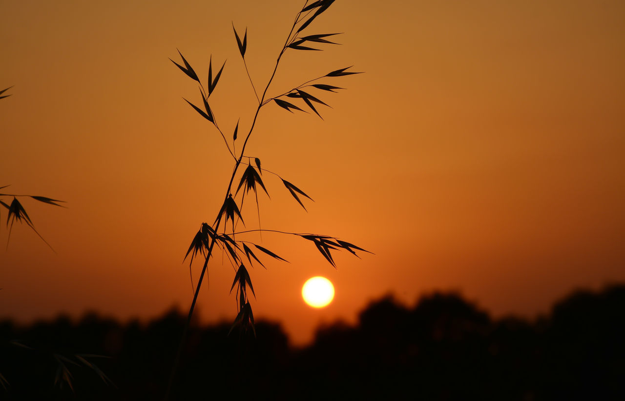 Beauty In Nature Close-up Idylic Scene Nature Orange Color Outdoors Plant Scenics Silhouette Sky Sun Sunset Tree